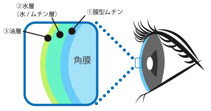 涙の膜構造